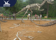 High Simulated Realistic Dinosaur Fossil Life Size For Zoo Or Technology Center